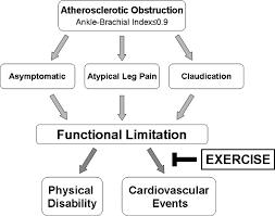 exercise rehabilitation in peripheral artery disease circulation