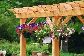 Plants For Pergolas by The Skinny On Timber Frame Pergolas Timber Frame Hq