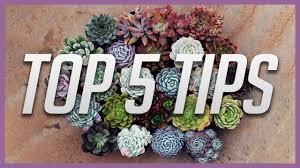 choosing the right pot for your succulents flower pot hanger