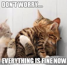 Kittens Memes - consoling kittens meme generator imgflip