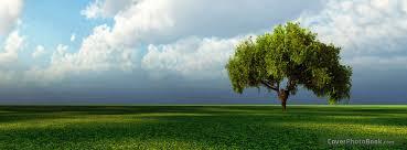 landscape lone tree cover nature