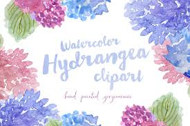 watercolor hydrangea flowers clipart spring flower clipart clip
