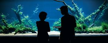 the world u0027s largest nature aquarium project takashi amano x