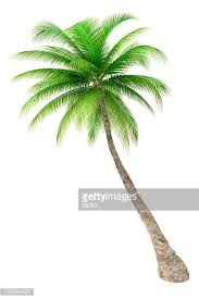 palm tree stock photos and pictures getty images