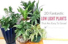 best light for plants plants that need no light plants light denverfans co
