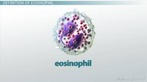 Resume Meaning In Telugu What Are Eosinophils Definition U0026 Function Video U0026 Lesson
