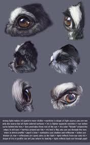 Dog Anatomy Book Best 20 Animal Anatomy Ideas On Pinterest Dog Anatomy Dog