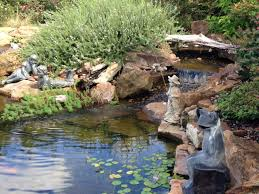 Backyard Pond Building Process Of Backyard Pond Building With Professionals
