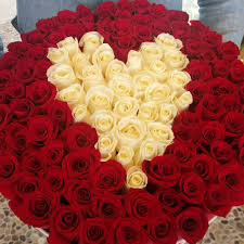 the royal roses luxury roses that last a year