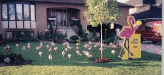 pink flamingos pink flamingos rent for 1 00 each if you do your