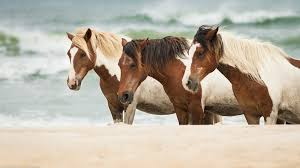 high definiton 4k wall murals hd horses horse sea sand apple high definiton 4k wall murals hd horses horse sea sand apple 4k animal images 2048x1152 wallpaper hd