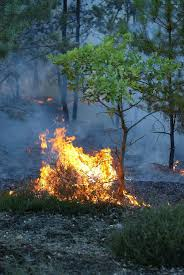Wildfire Scientific Definition by Wildfire Wikipedia Ang Malayang Ensiklopedya