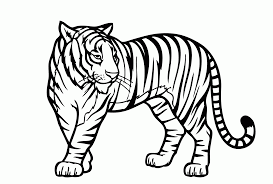 tiger shark coloring pages trendy spectacular tiger shark
