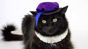 cat or dog renaissance costume professor pincushion