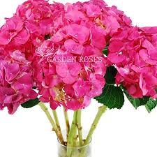 bulk hydrangeas bulk hot pink hydrangeas for your wedding