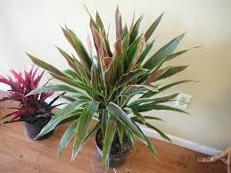 what u0027s in stock u2013 current tropical plants photos exotica