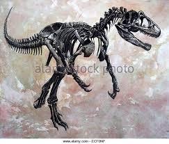 allosaurus dinosaur skeleton stock photos u0026 allosaurus dinosaur