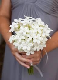 Stephanotis Flower Wedding Flower Inspiration Stephanotis