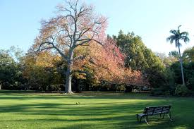 Melb Botanical Gardens by Melbourne U0027s Top 5 Gardens Taravels