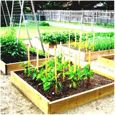 backyards winsome small vegetable garden design backyard ideas