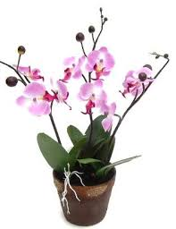 artificial orchids potted artificial orchids from evergreen direct