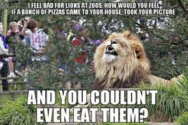 Sorry Memes - i feel sorry for lions at the zoo meme