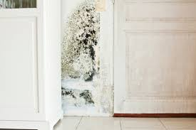 what to do if your house has mold or you think it does