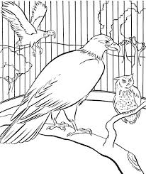 60 zoo images zoos coloring zoo animals