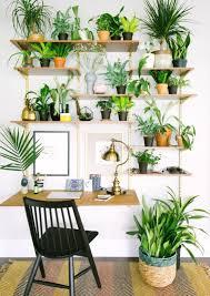 best 25 plant decor ideas on pinterest house plants best 25 plant wall ideas on pinterest decor garden intended for 19