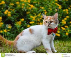 cute cat with ribbon butterfly stock photo image 84262652
