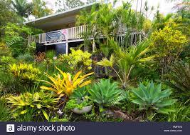 Tropical Plants For Garden - tropical garden at an art gallery in eumundi queensland