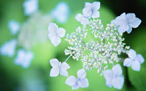 flowers hd wallpaper qygjxz