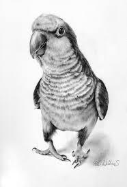 best images about parrots on pinterest phoenix bird owl