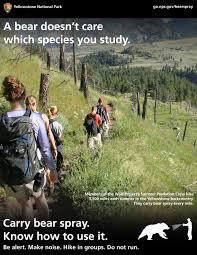a bear doesn u0027t care