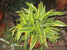 house and patio plants kathy u0027s korner