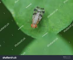tiny baby house fly perched on stock photo 451155442 shutterstock