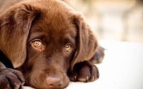 cute dog wallpapers very cute hd dog wallpaper wallpaper wiki