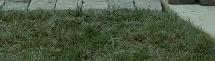 Sod Estimate by Sod Installation Green Irrigation Landscaping