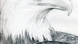 how to draw an eagle head step by step easy video tutorial for