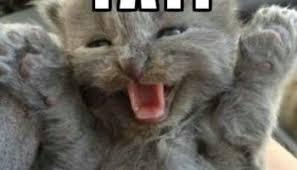 20 happy memes that scream it s friday volume 1 love brainy quote