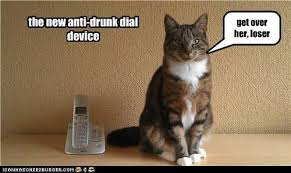 Drunk Cat Meme - animal capshunz drunk funny animal pictures with captions