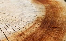 wood wallpaper wood wallpaper 850 verdewall