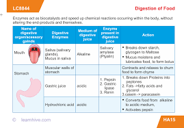learnhive icse grade 9 biology human digestive system lessons
