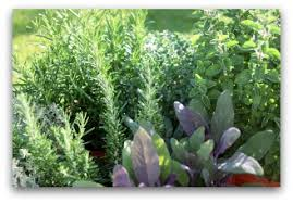 herb container gardens indoors or outdoors