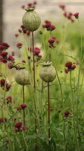 Ceramic Garden Art Su Cloud Ceramics Set Of Three Small Stoneware Seed Heads On Steel