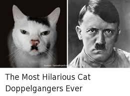 Most Hilarious Meme - hosted fantasticpictu the most hilarious cat doppelgangers ever