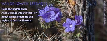 wildflower status 2 23 16 anza borrego foundation abf