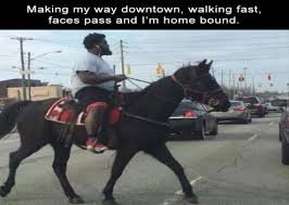 Making My Way Downtown Meme - funny animal pictures making my way downtown walking fast