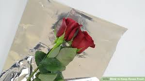 How Much Is A Dozen Roses How To Keep Roses Fresh 13 Steps With Pictures Wikihow