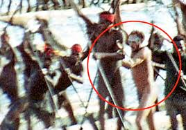 is this proof michael rockefeller joined a tribe of
